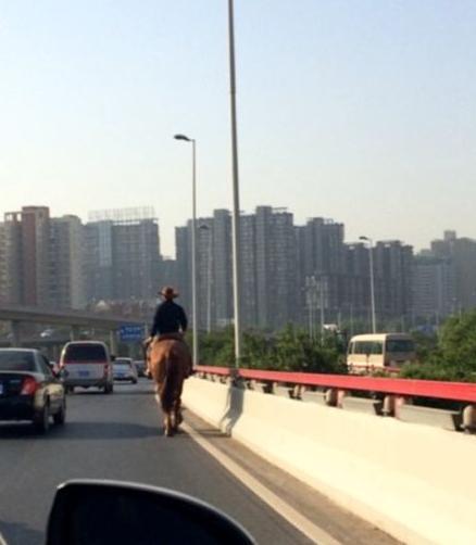 郑州中州大道现骑马男 网友称秒杀路虎奔驰
