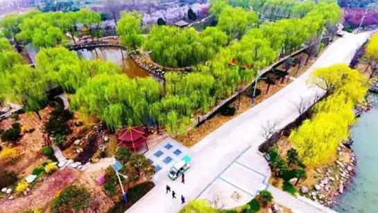 鄢陵花博园 带你邂逅一场风车花的童话世界