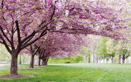 诗意生活——让家住进公园里