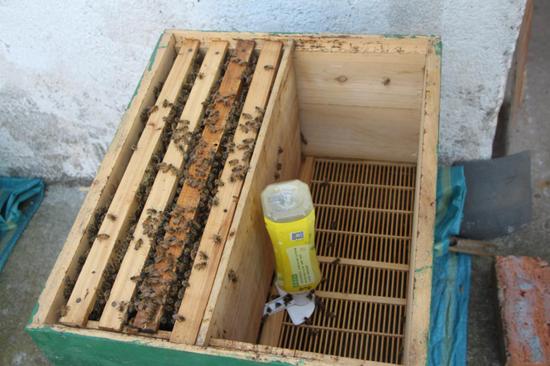 发现雁湖之美——甜蜜的养蜂人