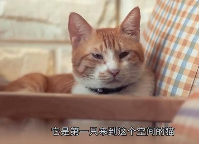 长沙有位喵小姐开了家咖啡馆 里面有13只猫咪