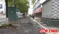 怀化怀东路人行道绿化提质工程预计4月底完工