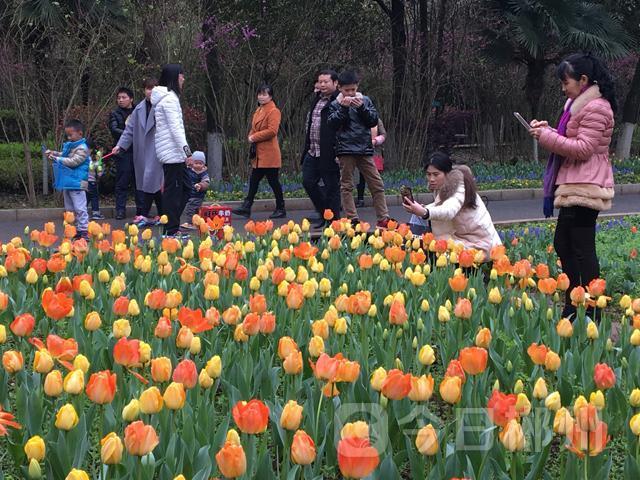 3月19日,郴州市民在郴城南岭植物园观赏郁金香.