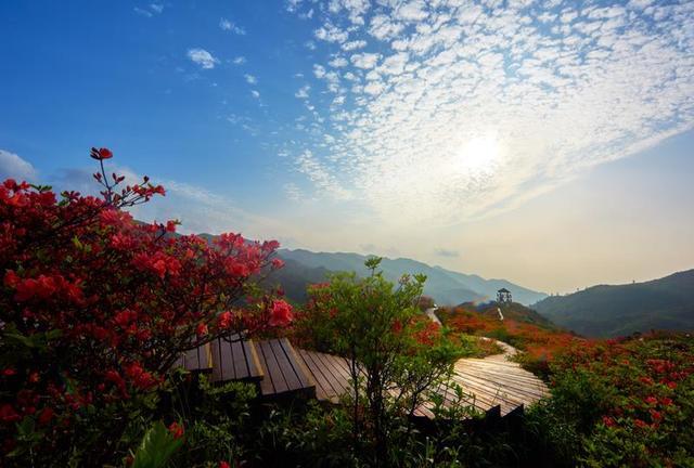 """大围山森林茂密,资源丰富,风景秀丽,气候宜人,被称为""""湘东绿色明珠"""""""