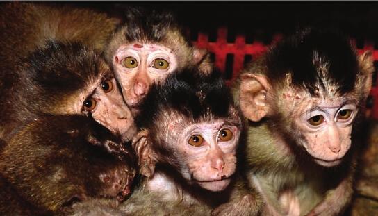 长沙警方解救百只越南来的食蟹猴 进价1千2一只