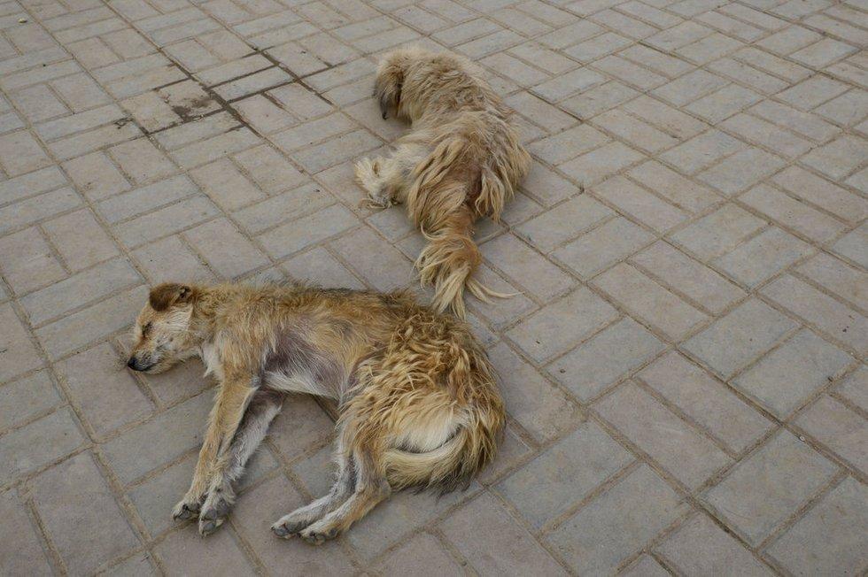 失去家园的可怜动物
