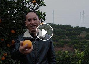 """刘正明:实现冰糖橙从""""商品""""到""""贡品""""的转变"""