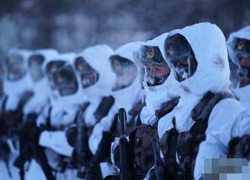 """挺立在风雪中的""""北极杨"""""""