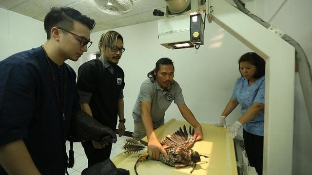 医师从业14年共救治近20万只小动物 蟒蛇狮子老虎都有