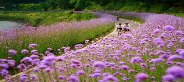 千岛湖绿道环湖骑行绿道由春,夏,秋,冬色慢行道组成,选取红,蓝,绿,紫