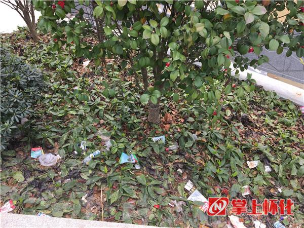 """怀化城区部分绿化带变成""""垃圾箱"""" 曝光"""