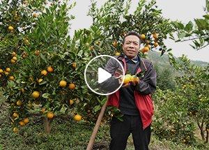 宋一彪:摔成重残,自学微商,年销70万斤冰糖橙