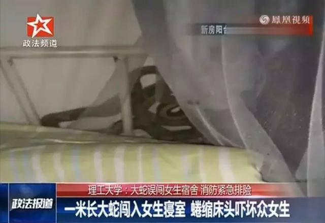 长沙理工大学女生宿舍床边惊现1米多长大蛇