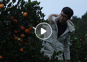张海:90后电商黑马,5天时间狂销10万件冰糖橙