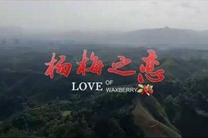 《杨梅之恋》