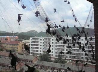 湘乡市村民家遭数千蝙蝠闯入 被占一层楼