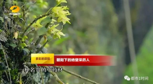 邵阳采药人仅靠一根绳索在悬崖峭壁上采摘