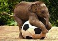 卖萌的大象宝宝(组图)