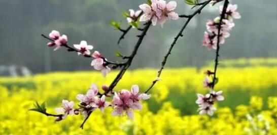 花都开好了!3月的岳阳美出新高度!