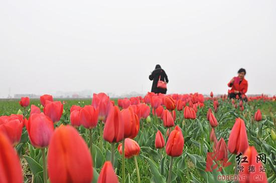 3月湖南花境大赏:带着味蕾去寻花