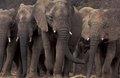 高清大图:震撼的动物大迁徙