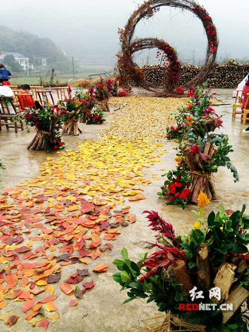 乡村山里最常见的枫叶,银杏叶被当做玫瑰花铺满地面.图片