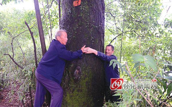 (村里两人合抱的古树。)