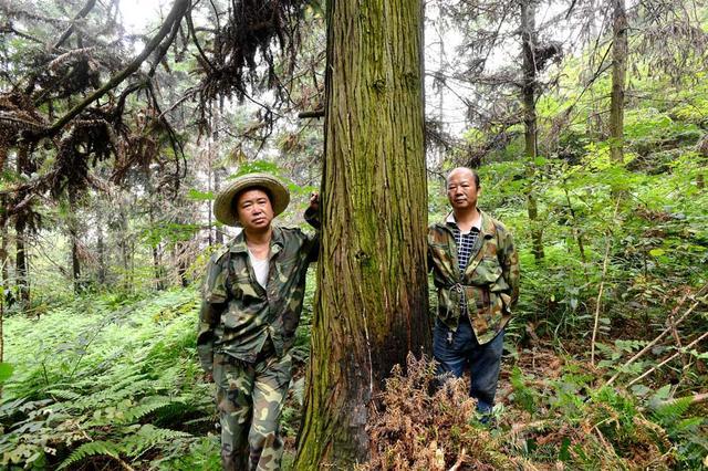 湖南一护林员28年坚守山头 曾被鸟铳袭击被刀砍