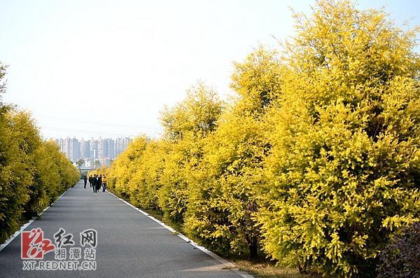 元旦假期湘潭旅游市场实现综合收入4.86亿元