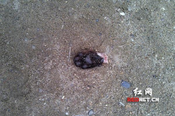 长沙一小区现猫被剥皮砍脚绑在单杠晾晒(图)