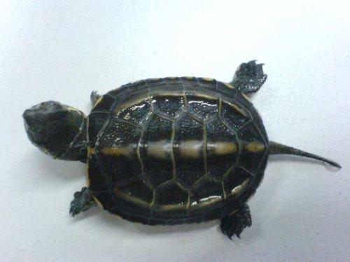 大师揭秘 养龟与家居风水的关系