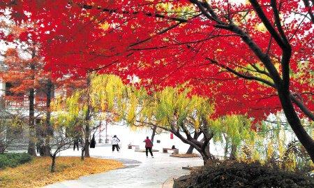 长沙烈士公园内冬日犹胜春朝