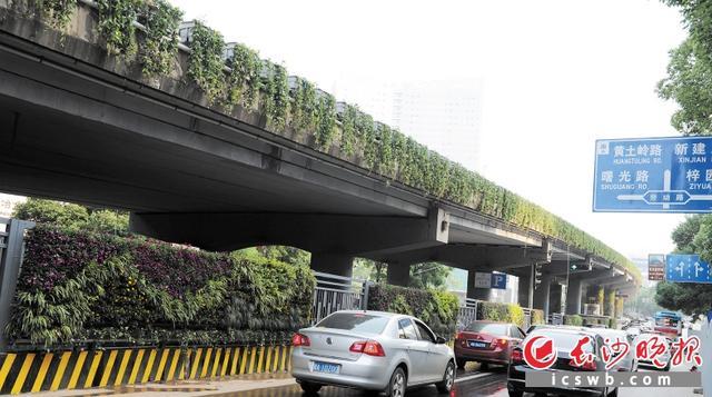 长沙2016年将建20条林荫大道 新增绿地600公顷高清图片