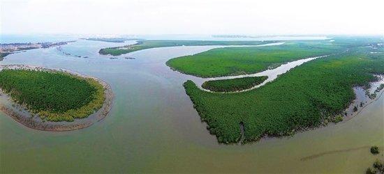 陵水红树林国家湿地公园总体规划通过专家评审