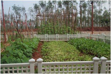 4个温泉泡池,鱼疗泡池,高尔夫果岭,农家菜园,艺术中心,国际双语幼儿园图片