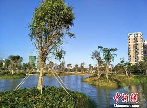 三亚市东岸湿地公园地66.77公顷,是该市内面积最大的淡水湿地。 王子谦 摄