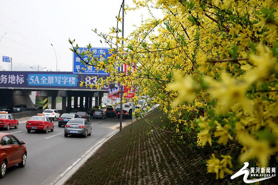 太原 滨河东路变身鲜花大道 迎最美四月天图片