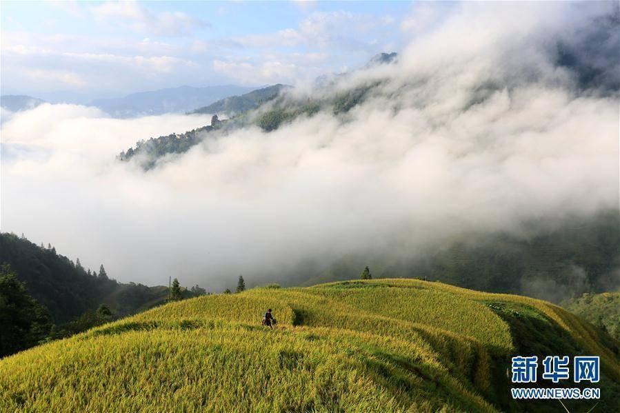 秋染田园 层层叠叠的梯田透露着丰收的气息