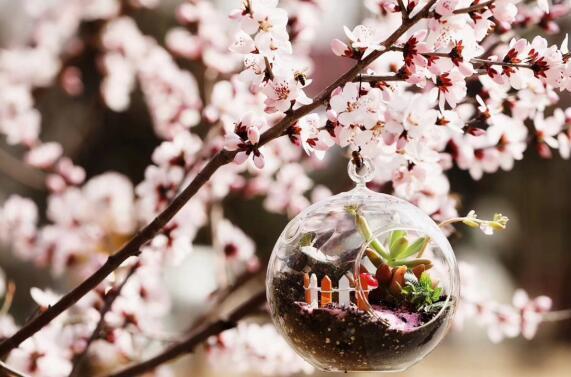 幸福生活+莫掷好春光 永定河孔雀第五届小镇风筝节