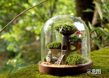 幸福生活·微景观DIY 玩趣绿意时光