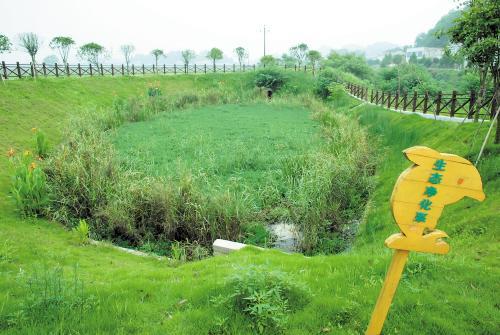 """生态沟渠专门设计了供青蛙等小动物通行的小斜坡和栖息的空心砖,这种"""""""