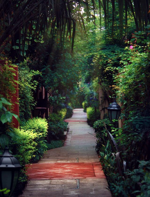 在小院青城园区约4000平米楠竹林,每一根竹子都着30年以上的生命图片