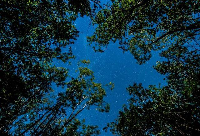 成都只此星空璀璨 保利两河森林星空墅全新面世