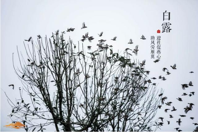 2016陪伴黄龙溪谷 走过的二十四节气