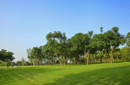 生态文明成就品质社区 鲁能泰山7号促进新住宅文化