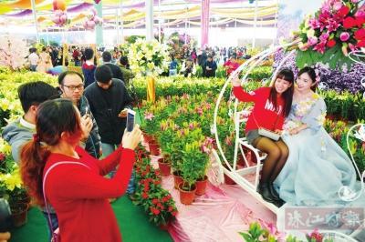 里水百合花文化节28日开幕