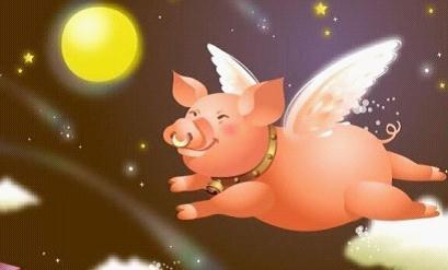 幸福的猪_丢了幸福的猪