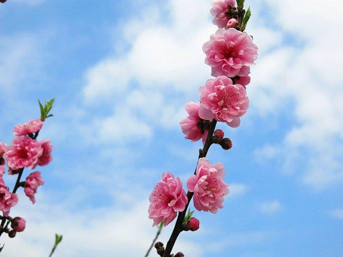 预告:花开正是好春光,小编邀你赏花去!