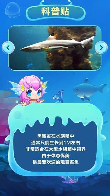 前方高能!黑鳍鲨领衔海底总动员群袭莆田!