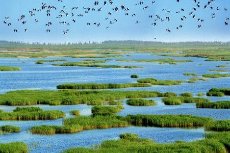 福州湿地4年减少6000公顷 房地产开发是主因